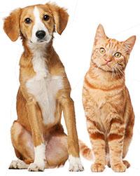 strzyżenie psów rzeszów