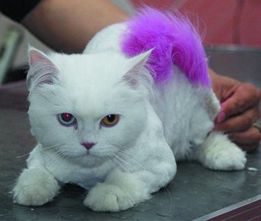 fryzjer dla psów rzeszów